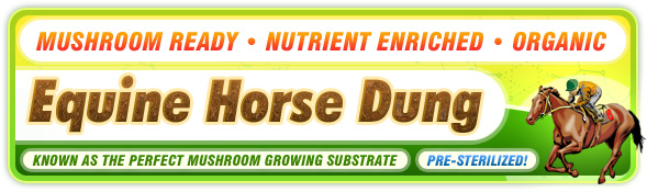 New Horse Dung Substrate!